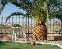 the big thorny business of palm trees and cacti wired