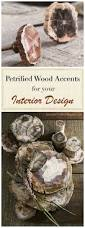 gorgeous petrified wood accents for your home decor decorative
