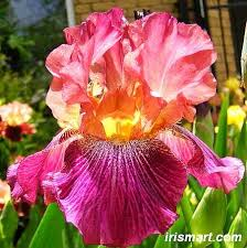 Awesome Looking Flowers 1040 Best The Witch U0027s Garden Images On Pinterest Plants Flower