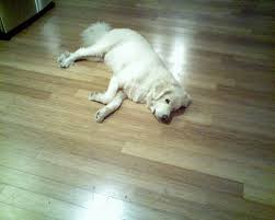 top 7 best flooring for dogs enkiverywell