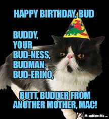 cat birthday greetings to him funny cat man purr day memes guy b