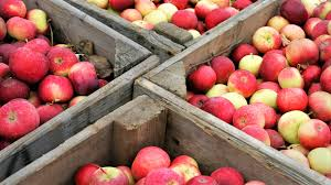 sweet taste of fall 10 apple events for families parentmap