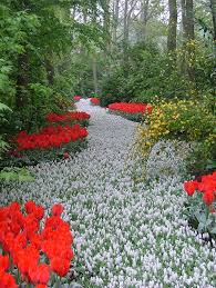 A Garden Of Flowers by Keukenhof Gardens Down The Garden Path Pinterest Paths