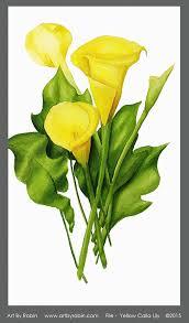 yellow calla by robin yellow calla