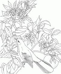 state bird coloring pages kids coloring