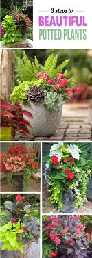best 25 potted plants ideas on outdoor potted plants