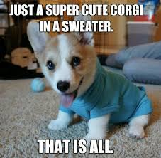 Corgi Puppy Meme - 59 best cute corgis images on pinterest pets corgi dog and corgis