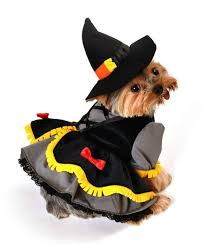 Halloween Costumes Small Dogs 240 Cute Pet Costumes Images Animals Animal