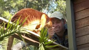 tree kangaroo 72 cutest animals national zoo canberra youtube