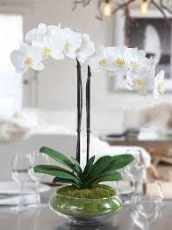 white silk phalaenopsis orchid arrangement nature i need some