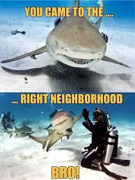 Shark Week Meme - i think this is a fit for shark week meme guy