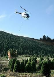 Pacific Northwest Christmas Tree Association - most northwest christmas trees take a short flight before landing