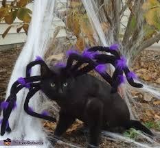 Animal Halloween Costume 74 Pet Halloween Costumes Images Animals Pet