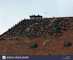 skylight design blue plague pigeon swarm tile rat skylight design shaping