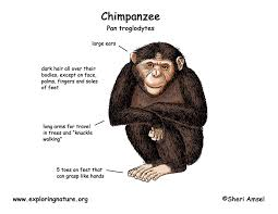 chimp color diagram150 jpg