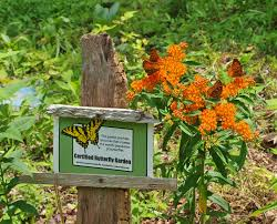 naba butterfly garden and habitat program four out of four great spangled fritillaries prefer naba certified gardens