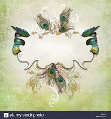 vintage background with butterflies and peacock feather stock photo