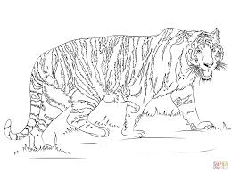 walking tiger coloring page free printable coloring pages