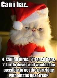 mer enn 25 bra ideer om funny christmas wishes på pinterest