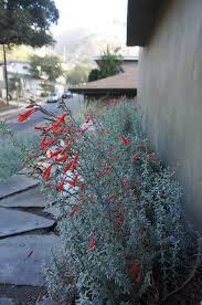 Rock Garden Tour by Garden 18 In Beachwood Canyon Theodore Payne Native Plant Garden