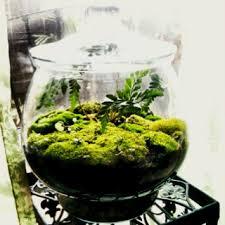 download making a moss terrarium solidaria garden