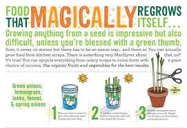 infographic regrowing fruits u0026 vegetables from scraps recoil