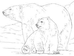 polar bear cub eating fish coloring animal awesome book