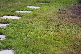 How To Get Rid Of Moles In The Backyard by Home Remedies To Get Rid Of Moles In My Yard Hunker