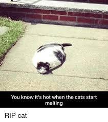 Melting Meme - you know it s hot when the cats start melting rip cat meme on me me