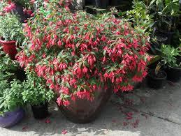 amazing plants for outdoor pots and plants for pots ideas pots