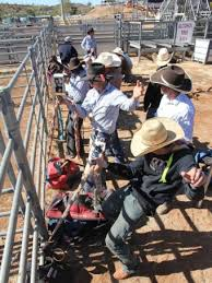 wannabe cowboys learn from the best at mount isa rodeo