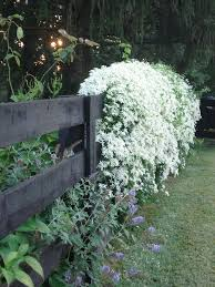the 25 best white flowering plants ideas on pinterest