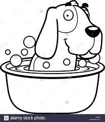 basset hound black and white stock photos u0026 images alamy
