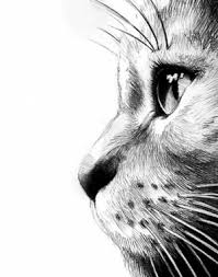 charcoal cat drawings google search cat tails pinterest