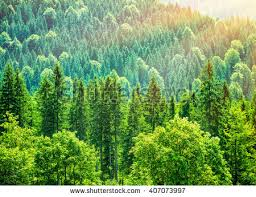 green tree forest background beautiful bird stock photo 407073997