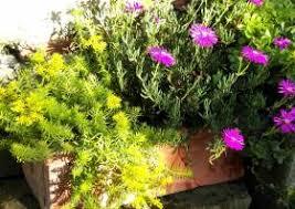 winterharte pflanzen balkon balkonbepflanzung ganzjährig winterharte dauerbepflanzung balkon