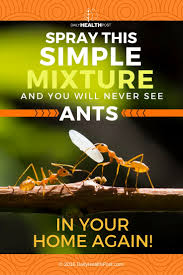 Home Again by Get Rid Of Ants Fast With These 8 Easy And Natural Solutions