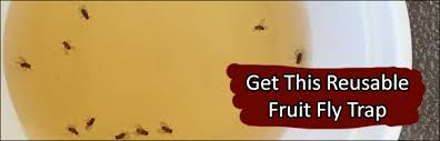 fruit flies in sink 6 ways to instantly get rid of gnats fruit flies at home