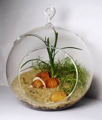 26 best hanging glass terrariums images on pinterest terrariums