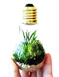 grow light bulbs lowes lowes plant light coolman club