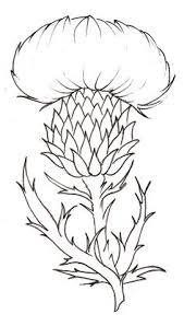 simple thistle drawing google search idaho symbols pinterest