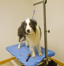 dog grooming table for sale affordable dog grooming table arm beblincanto tables