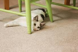 Cat Under Chair Adjective Cat