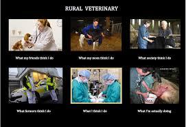 Vet Memes - rural veterinary what people think i do what i really do