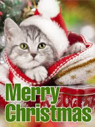 cat christmas santa cat merry christmas card birthday greeting cards by davia