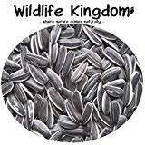 dawn chorus black sunflower seeds for wild birds 1 kg amazon co