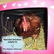 the chicken nest box solution tv
