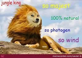 Such Meme - wow such lion by xavier b meme center
