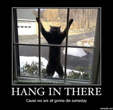 Hang In There Meme - original funny gifs and memes hang in there demotivational