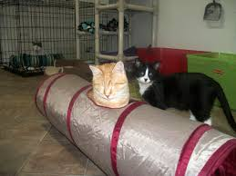 Blind Cat Sanctuary Meet The Happy Kitties Of Blind Cat Rescue And Sanctuary Catster